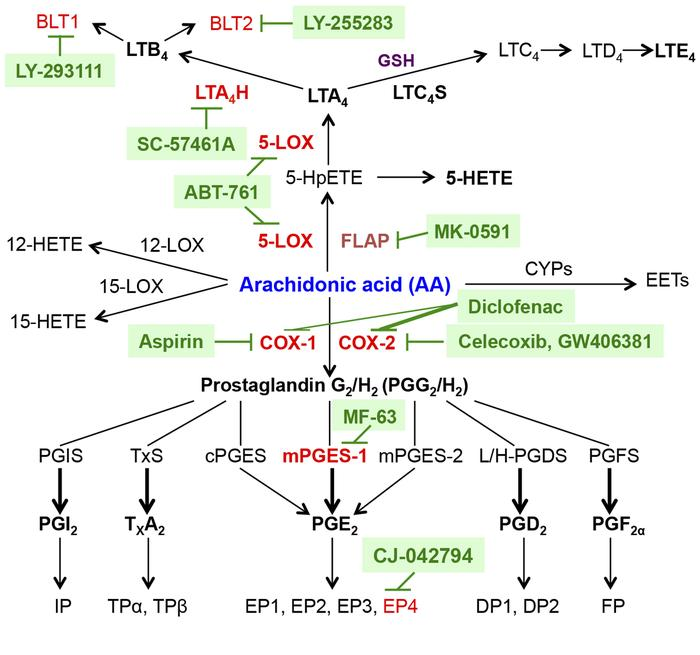 Antiinflammatory drug targets from the COX and 5-lipoxygenase pathways. ...
