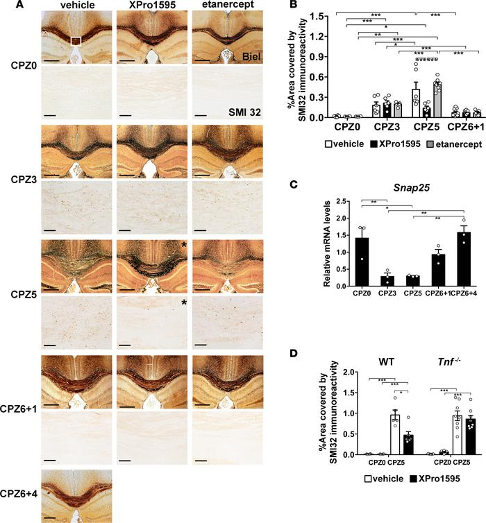 Therapeutic inhibition of soluble TNF in brain does not alter acute cupr...