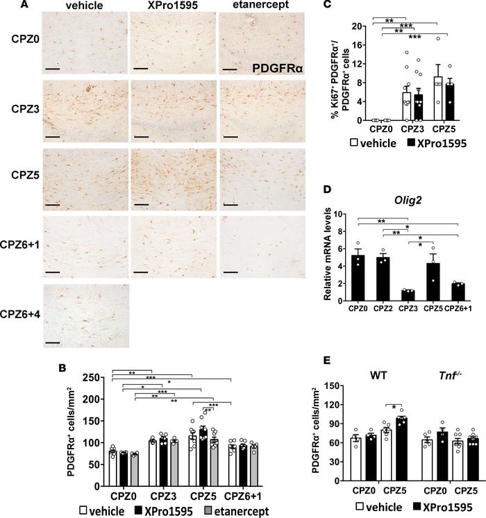 Inhibition of soluble TNF in brain increases OPC response in demyelinate...