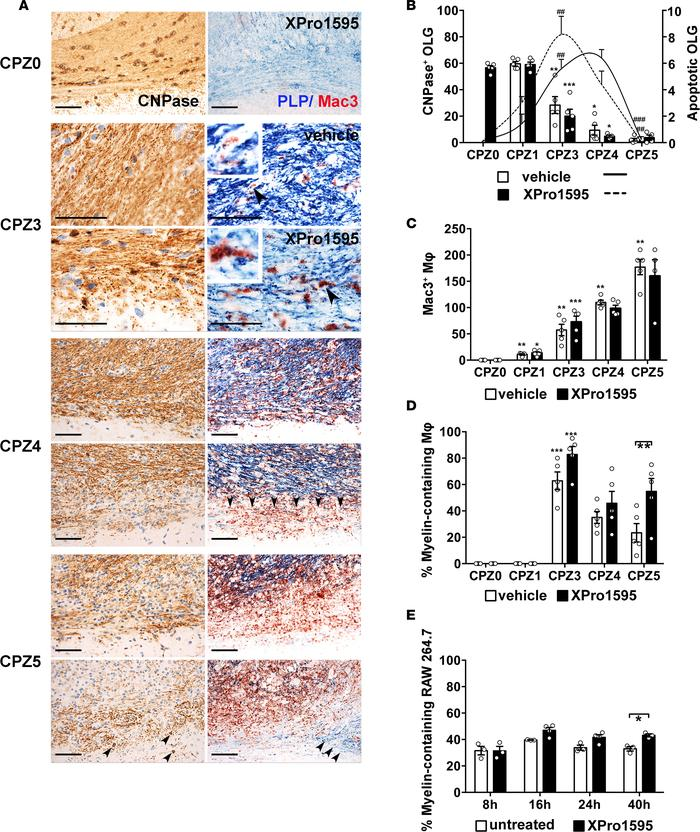 Inhibition of soluble TNF increases the clearance of myelin debris by ph...