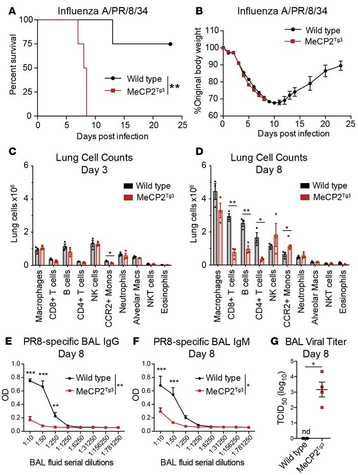 MeCP2Tg3 mice are highly susceptible to influenza A infection, with late...