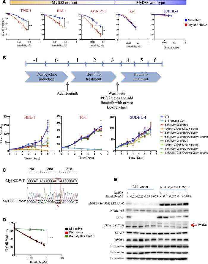 MyD88 confers resistance to ibrutinib in ABC DLBCL. (A) Five DLBCL cells...