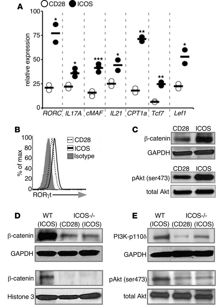 ICOS stimulation induces β-catenin and PI3K/Akt/p110δ in Th17 cells. (A)...