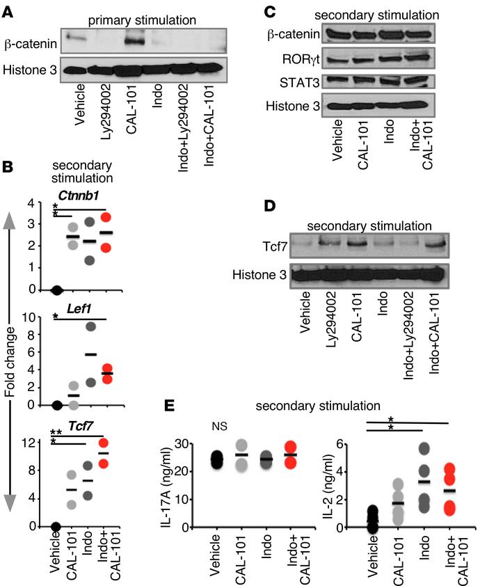 Wnt/β-catenin and cytokines rebound in dual-inhibited antitumor Th17 cel...