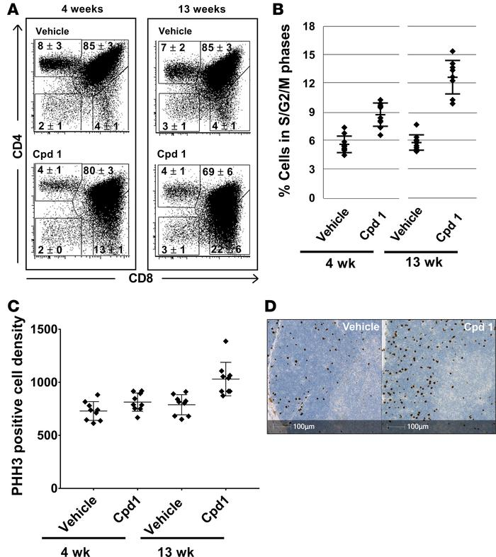 Thymocyte changes in rats treated with retinoic-acid-orphan-receptor-C (...
