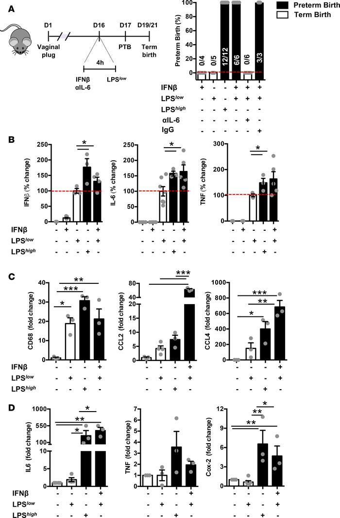 IFN-β is sufficient to prime for secondary inflammatory challenge–driven...