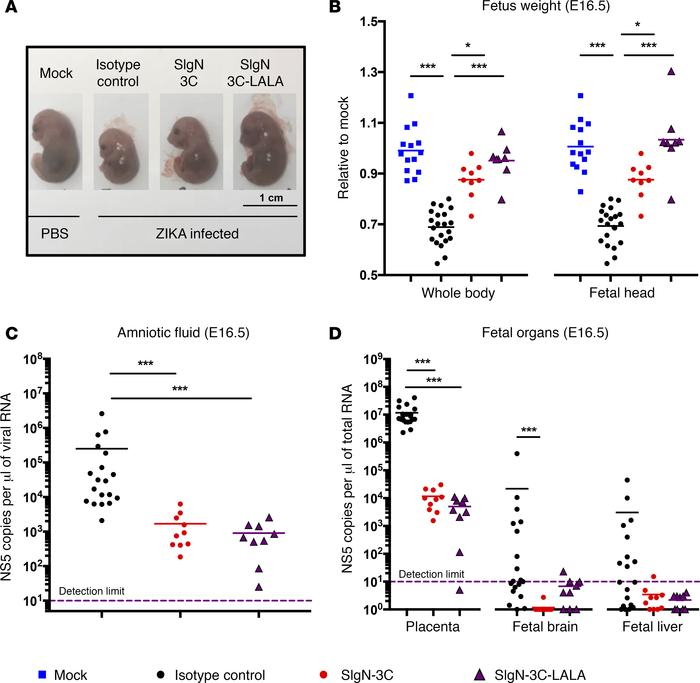 SIgN-3C and SIgN-3C-LALA treatments prevent ZIKV-induced congenital deve...