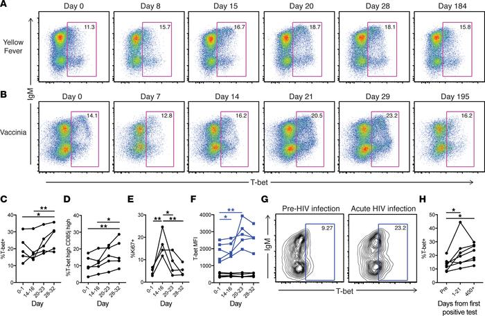 Longitudinal T-bet+ B cell dynamics in yellow fever virus–vaccinated, va...