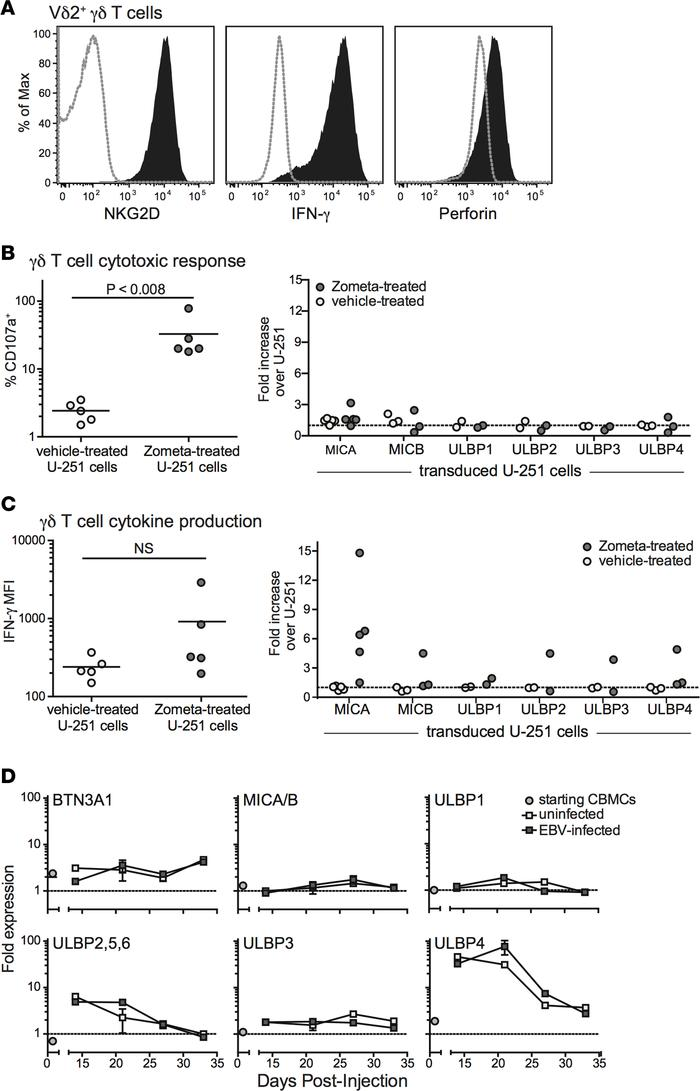 Analysis of TCR- and NKG2D-mediated Vδ2+ T cell responses. Vδ2+ T cells ...