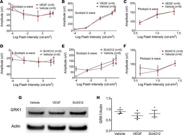 Effect of VEGF or VEGFR blockade on photoreceptor function and survival ...