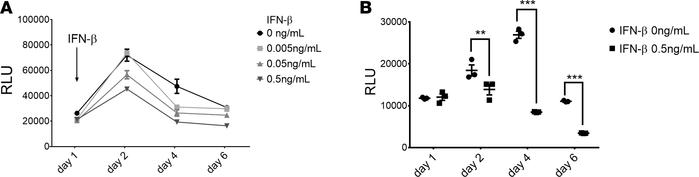 IFN-β inhibited AAV transgene expression in the HeLa cell line. HeLa cel...