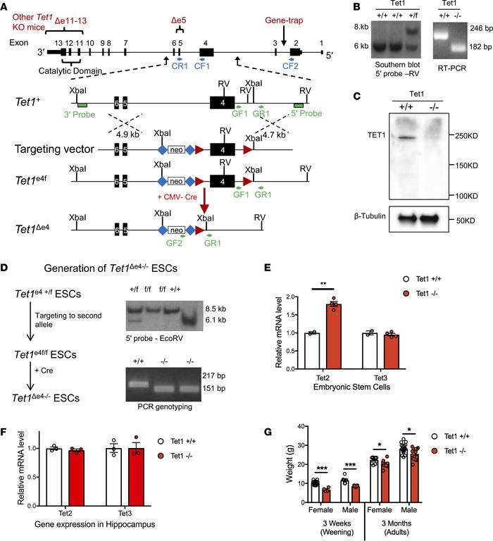Generation and characterization of Tet1 mutant (Tet1Δe4) ESCs and mice. ...