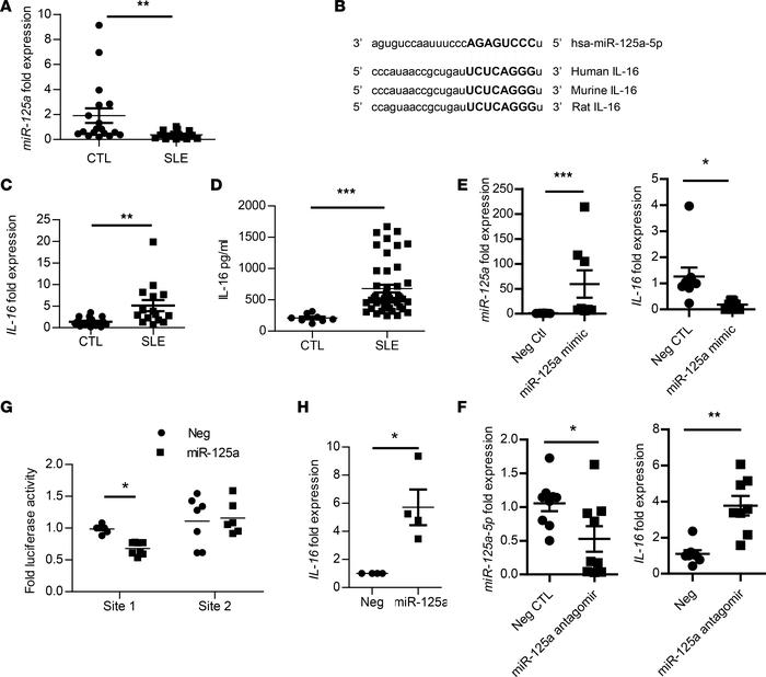 IL-16 a direct target for miR-125a in SLE monocytes. (A) hsa-miR-125a ex...