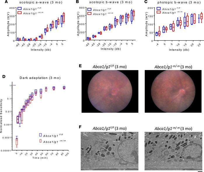 Three-month-old Abca1/g1–m/–m retinas do not show functional deficits or...
