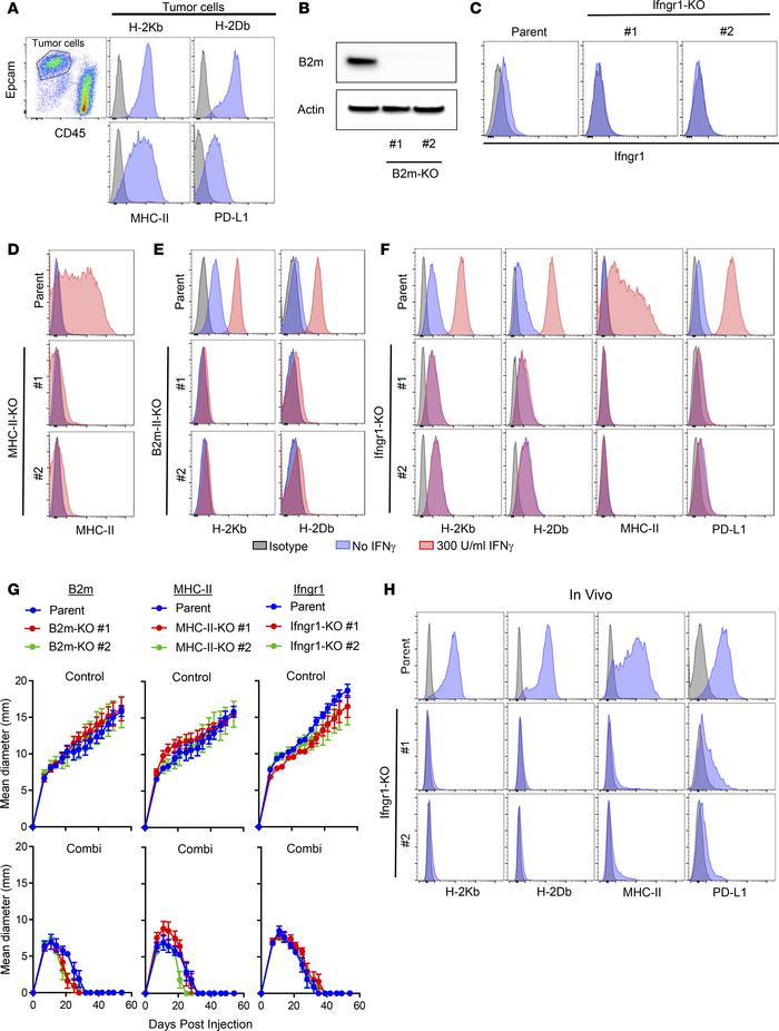 Immune checkpoint blockade–induced rejection of MCB6C tumors is not depe...