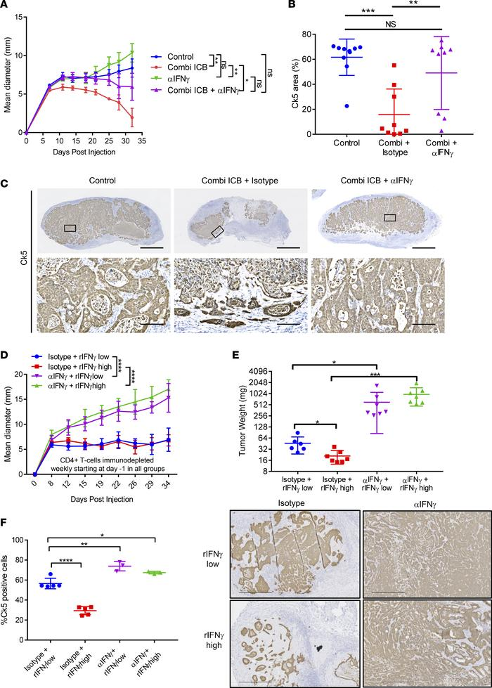 IFN-γ mediates ICB activity and is sufficient to inhibit tumor growth. (...