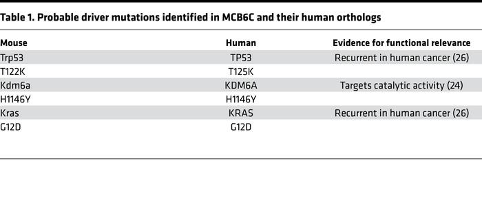 Probable driver mutations identified in MCB6C and their human orthologs