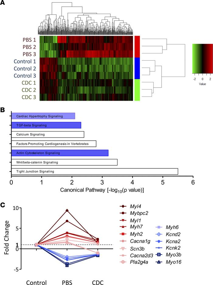 Transcriptomic analyses. (A) Heatmaps show that the phenotypic changes i...