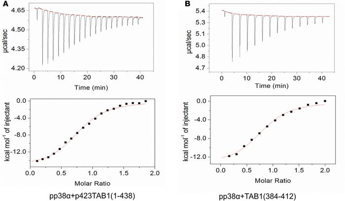 Thermodynamic characterization of the interaction between p38α and TAB1 ...