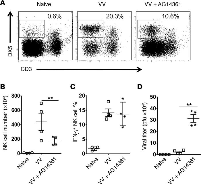 Inhibition of PARP-1 activity suppresses NK cell migration in response t...