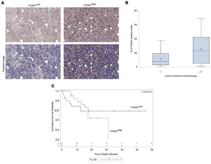 FOXM1 is an independent predictor of chemotherapy resistance in intermed...