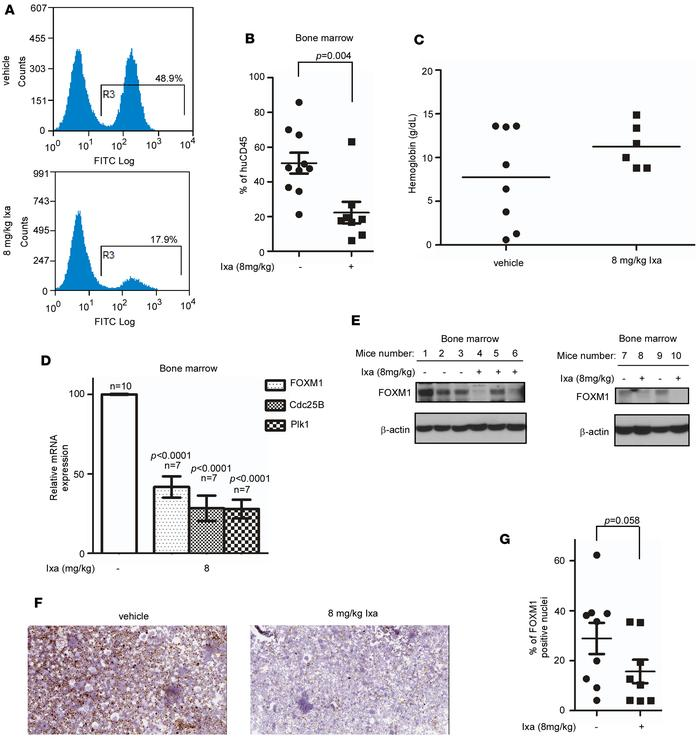 Ixazomib shows antileukemic activity and inhibits FOXM1 in an orthotopic...