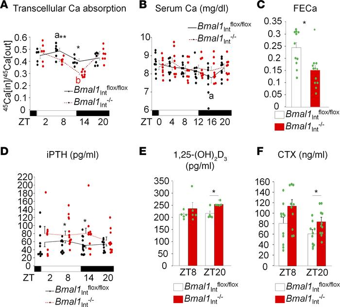 Transcellular Ca absorption is decreased in Bmal1Int–/–mice. (A) Transce...