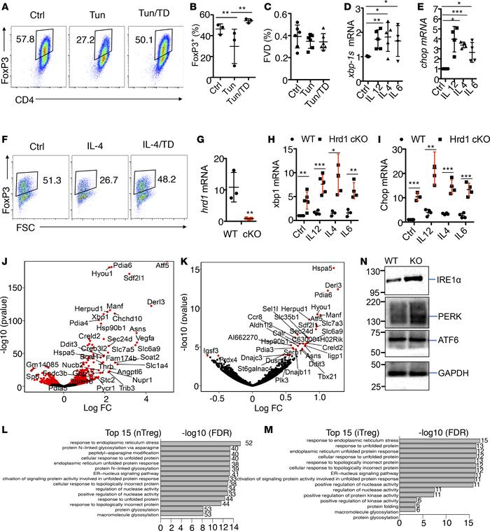 Hrd1 suppresses the ER stress response in Tregs. (A–C) Mouse CD4 T cells...
