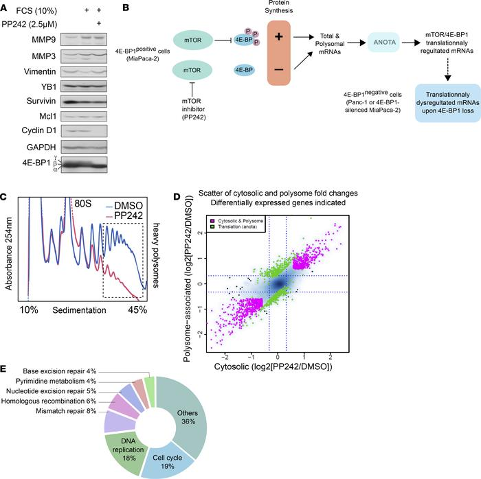 Polysome profiling allows the identification of the mTOR-dependent trans...