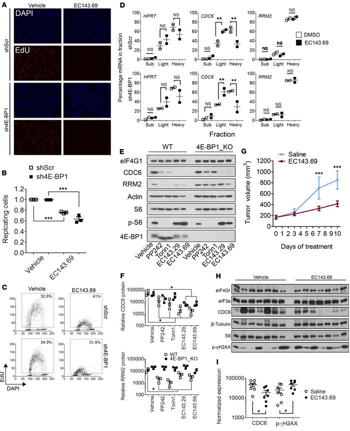 Silvestrol analogs abrogate DNA replication in pancreatic cancer cells a...