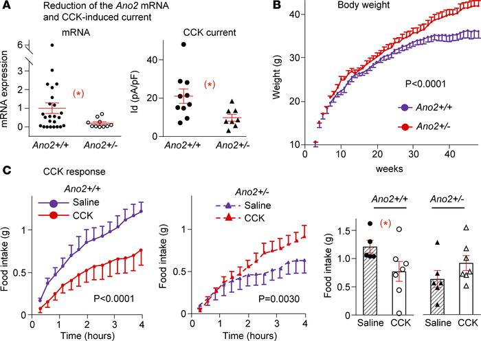 Weight gain and CCK-8 responses of heterozygote TMEM16B-KO mice. (A) Con...