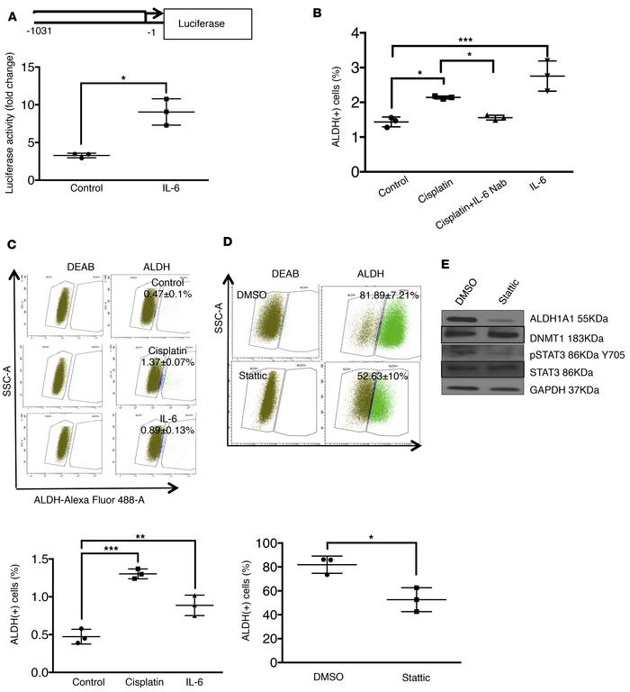 CDDP-induced IL-6 regulates ALDH1A expression and OCSC enrichment. (A) O...