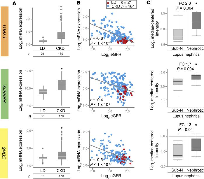 Expression of candidate early glomerular epithelial/PEC genes correlates...