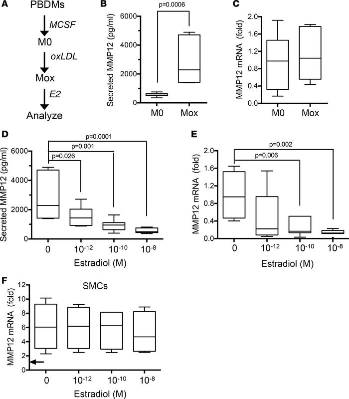 Estrogen inhibits MMP12 gene expression and secreted MMP12 in human Mox ...