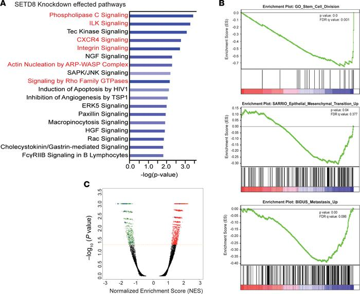 RNA-Seq reveals roles for SETD8 in stem cell maintenance, proliferation,...