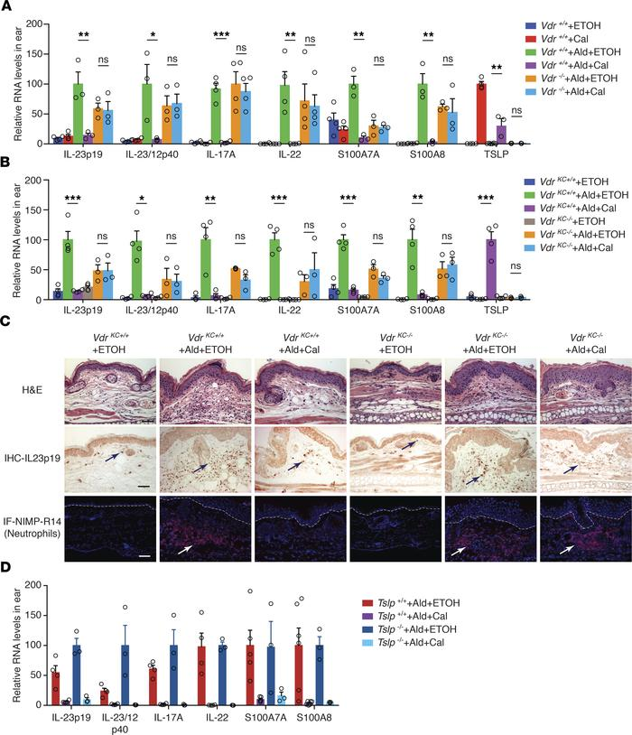 Keratinocytic VDR mediates the inhibition of IL-23/IL-17 and neutrophili...
