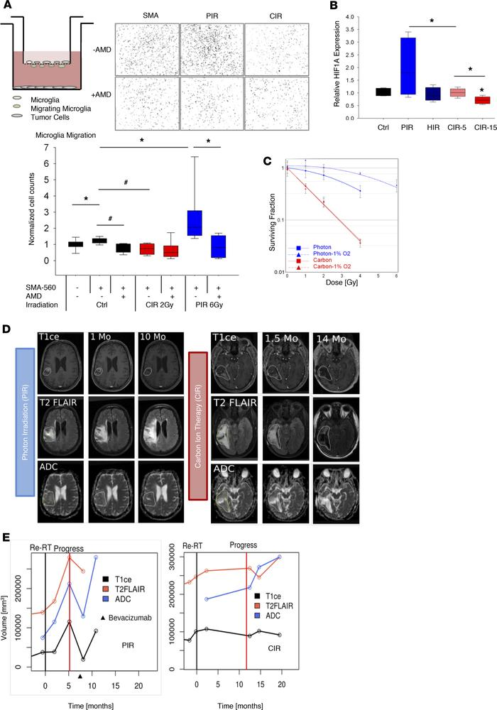 Functional validation of CIR effects on tumor hypoxia, HIF1-α/SDF1/CXCR4...