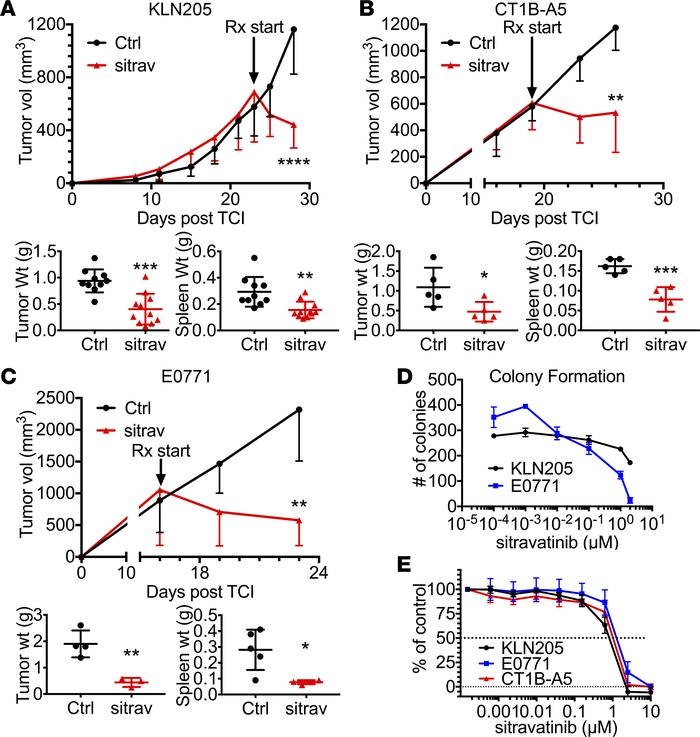 Sitravatinib has potent antitumor activity in vivo. (A–C) In vivo assess...