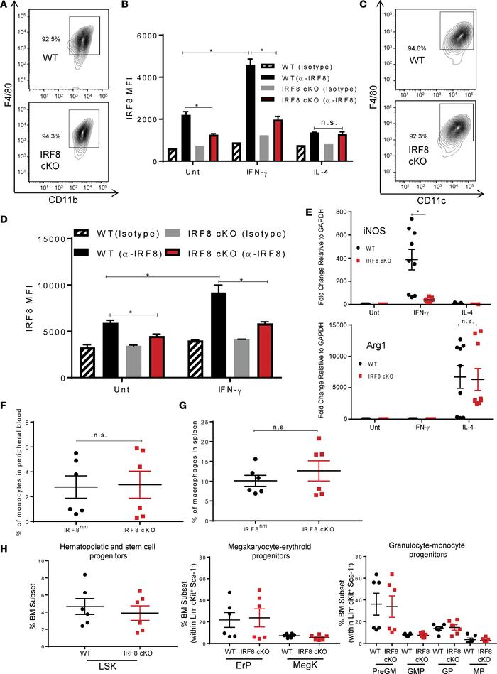 Conditional deletion of IRF8 does not impair myelopoiesis. (A) Flow cyto...