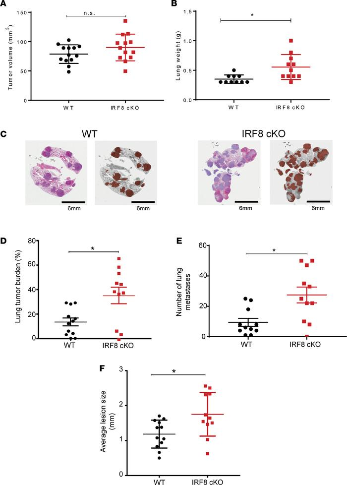 Reduced IRF8 expression in macrophages leads to increased spontaneous lu...