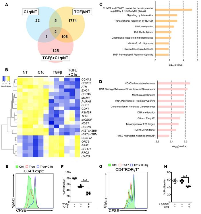 RNA-Seq and pathway analysis of C1q-treated CD4+ T cells. Human CD4+ T c...
