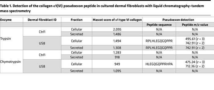 Detection of the collagen α1(VI) pseudoexon peptide in cultured dermal f...