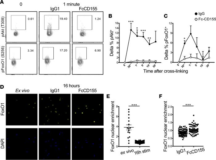 TIGIT stimulation suppresses the Akt/FoxO1 pathway. (A–C) Tregs stimulat...