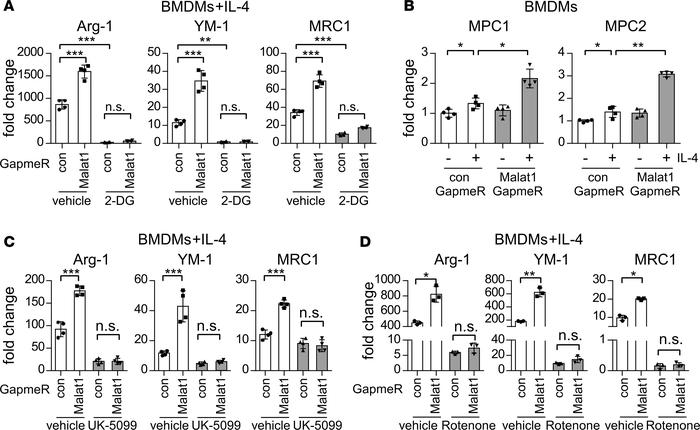 Malat1 regulation of alternative activation of macrophages is dependent ...