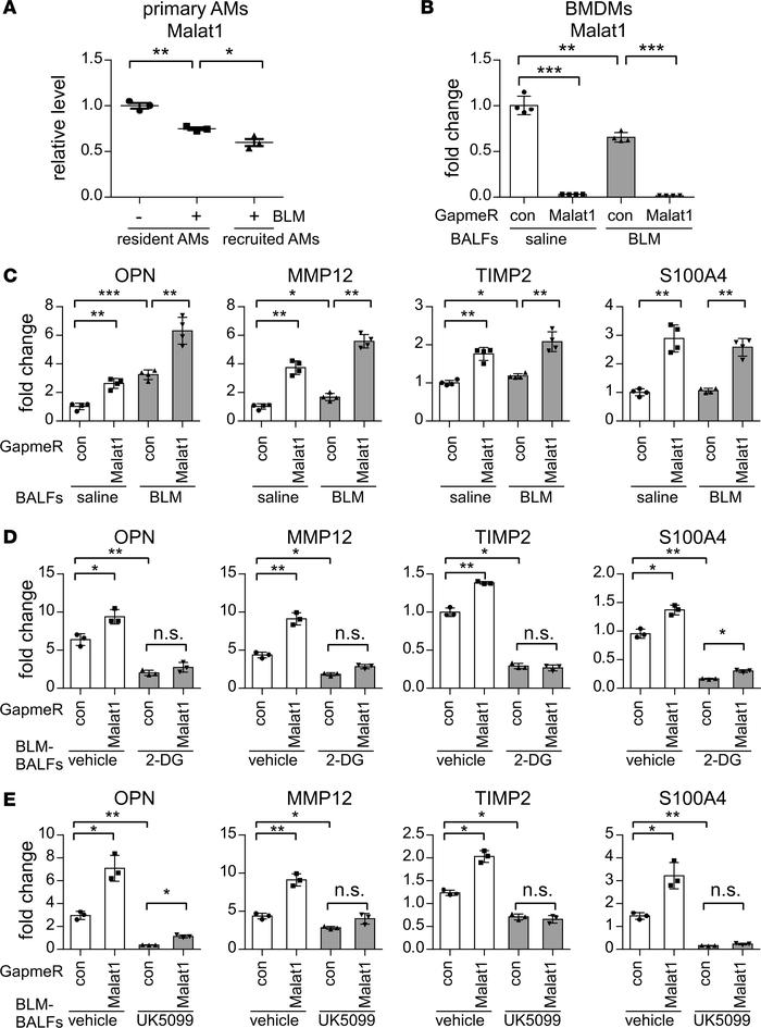 Malat1 knockdown promotes profibrotic differentiation of macrophages. (A...