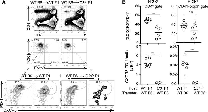 Recipient C3 deficiency prevents Tfh cell induction in a parent→F1 model...