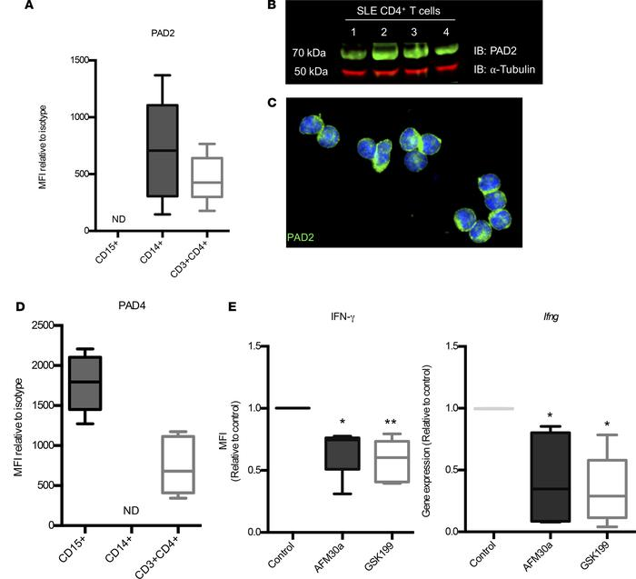 PAD2 and PAD4 are expressed on human T cells and modulate Th1 responses....