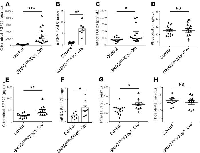 Constitutively active Gqα signaling induces FGF23 production in mice. (A...