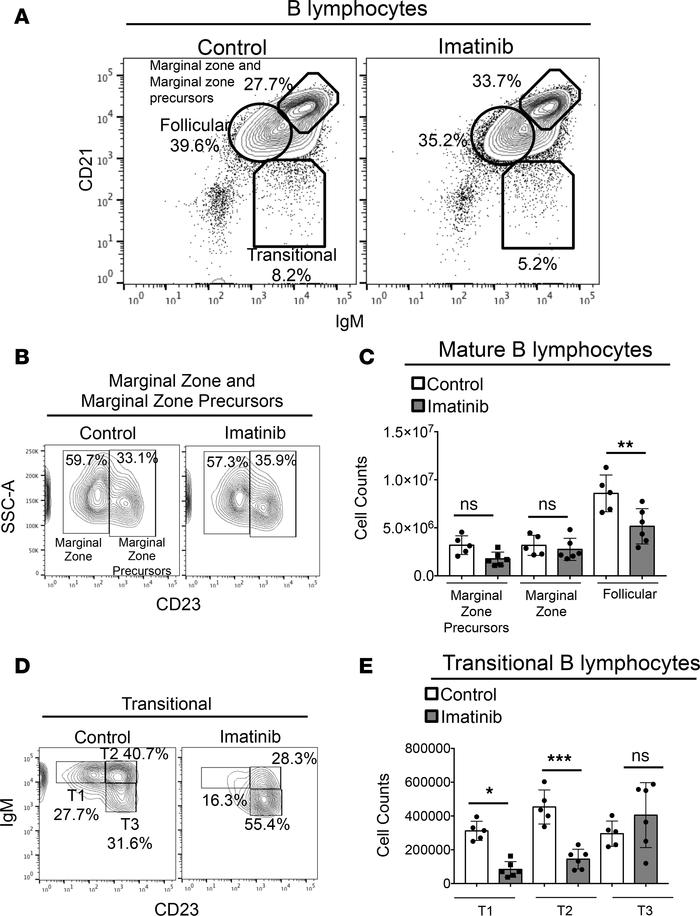 Imatinib preferentially depletes B lymphocyte subsets with reduced c-Abl...