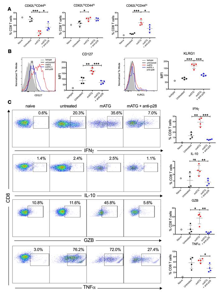 IL-27 neutralization alters the phenotype of reconstituted CD8+ T cells....